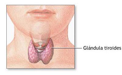 Tratamiento del tiroides, endocrinología en Santomera Murcia
